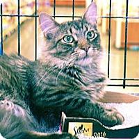 Adopt A Pet :: Hammish - Pittstown, NJ