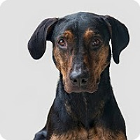 Adopt A Pet :: Pia - Jupiter, FL