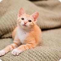 Adopt A Pet :: Tang - Fredericksburg, VA