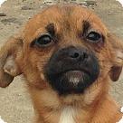 Adopt A Pet :: Dana
