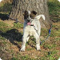 Adopt A Pet :: SAGE - Hartford, CT