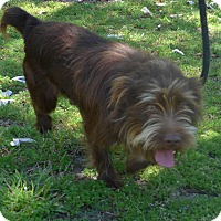 Adopt A Pet :: Max - Manning, SC