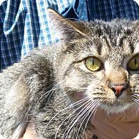 Adopt A Pet :: Terrer - Buffalo, WY