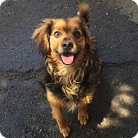 Adopt A Pet :: Roger - Fresno, CA