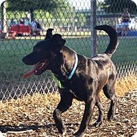 Adopt A Pet :: Boca - Hagerstown, MD