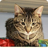 Adopt A Pet :: Ashe - New Richmond,, WI