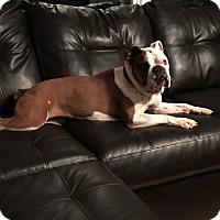Adopt A Pet :: Annabella - Alexandria, VA