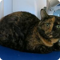 Adopt A Pet :: Kendra - Geneseo, IL