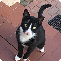 Adopt A Pet :: Oliver - Courtesy Listing - Sparta, NJ