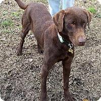 Adopt A Pet :: Sir Albert - Lafayette, LA