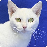 Adopt A Pet :: Alicia - Winston-Salem, NC