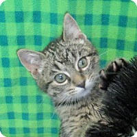 Adopt A Pet :: Chip - Lloydminster, AB