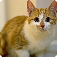 Adopt A Pet :: Reuben - Troy, MI