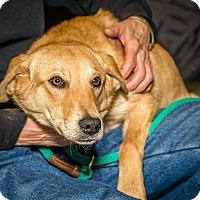 Adopt A Pet :: Kringle - Martinsville, IN