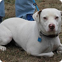 Adopt A Pet :: Sawyer - Mount Sterling, KY