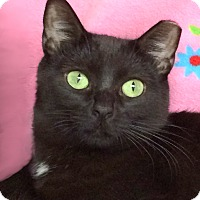 Adopt A Pet :: Luna - Colorado Springs, CO