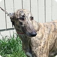 Adopt A Pet :: ON THE WINGS OF  JOAN - Grandville, MI
