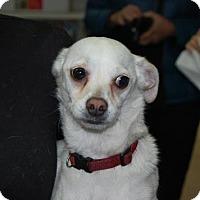 Adopt A Pet :: MJ - Brooklyn, NY