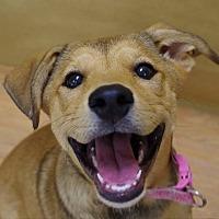 Adopt A Pet :: Sandie - Portland, IN