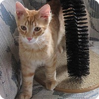 Adopt A Pet :: Hunter - Glenwood, MN