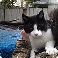 Adopt A Pet :: Trey - Cleveland, OH