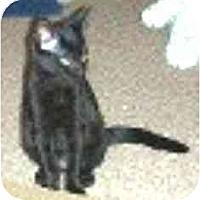 Adopt A Pet :: Cocoa - Summerville, SC