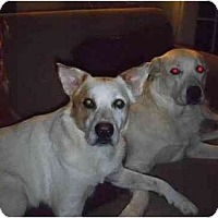 Adopt A Pet :: Max - Pensacola, FL
