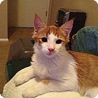 Adopt A Pet :: Martin - Phoenix, AZ