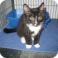 Adopt A Pet :: Warren - Shelton, WA