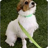Adopt A Pet :: Elliot - Mission Viejo, CA
