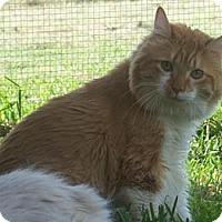 Adopt A Pet :: Leo - Ennis, TX
