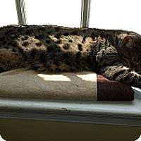 Adopt A Pet :: Brianna - Colmar, PA