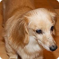 Adopt A Pet :: Duncan - Humble, TX