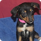 Adopt A Pet :: Camy