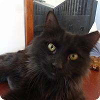 Adopt A Pet :: Moonshine - Colmar, PA