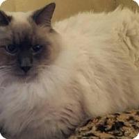 Adopt A Pet :: Delicious - Ennis, TX