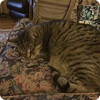 Adopt A Pet :: Buddy - Richmond, VA