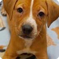 Adopt A Pet :: Yolo - Barnegat, NJ
