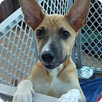 Adopt A Pet :: Marana - Apache Junction, AZ