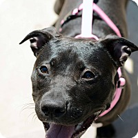 Adopt A Pet :: KImmi - Shrewsbury, NJ