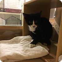 Adopt A Pet :: Fancy - Philadelphia, PA