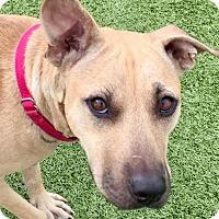 Adopt A Pet :: Treasure - Whitestone, NY