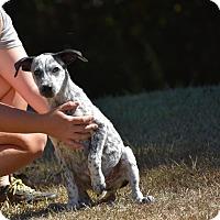 Adopt A Pet :: Tadpole - Groton, MA