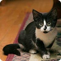 Adopt A Pet :: Lyra - Toronto, ON