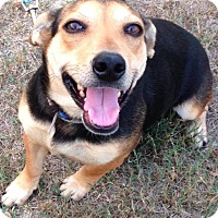 Beagle Mix Dog for adoption in New York, New York - Aggie