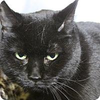 Adopt A Pet :: Fiona - Sarasota, FL