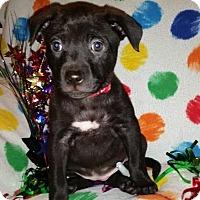 Adopt A Pet :: Fizzy - Detroit, MI