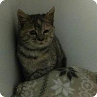 Adopt A Pet :: Sassafras - Queenstown, MD