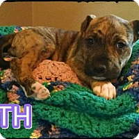 Adopt A Pet :: Faith - Fort Worth, TX