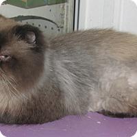 Adopt A Pet :: Edison - Mt. Prospect, IL